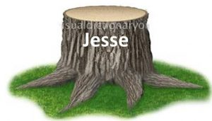 Dynasty pictured as a Stump of Jesse